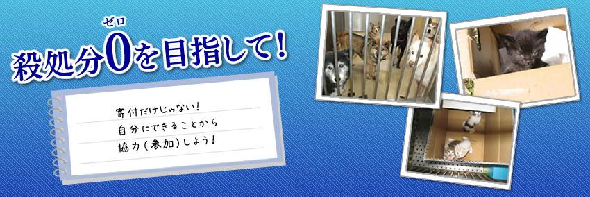 福岡で活動されているボランティア団体 ペット情報福岡わんにゃん